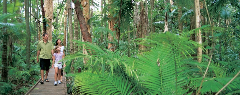 Smithfield-Rainforest